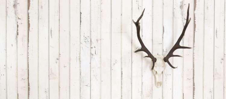 Deer antlers on a white wall