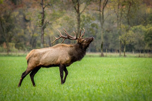 Bleats To Grunts Deer Sounds And What They Mean Targetcrazycom